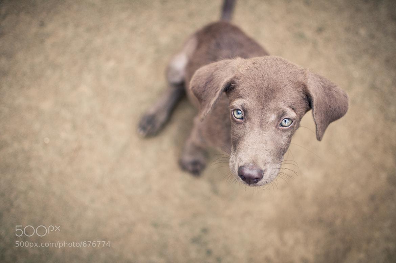 Photograph Green Eyes Dog by Carlos Lerbach on 500px