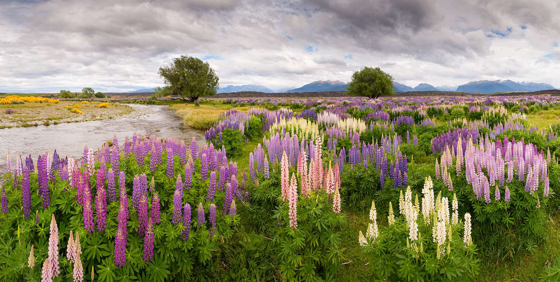Photograph Lupines by Oleg Ershov on 500px