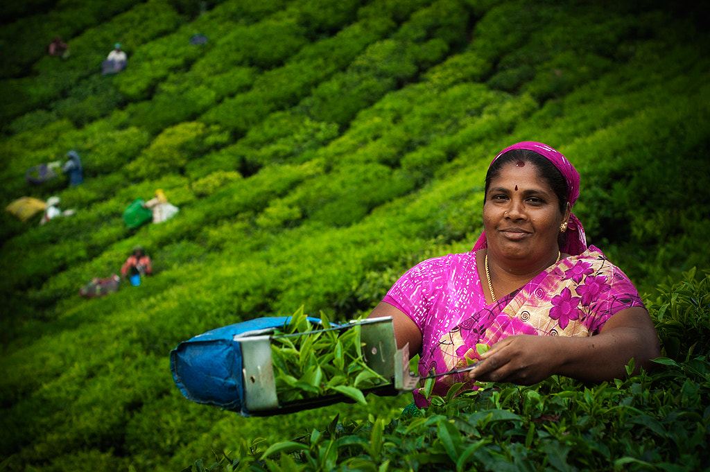 Photograph Women of the teaplantation by Niklas Andersen on 500px