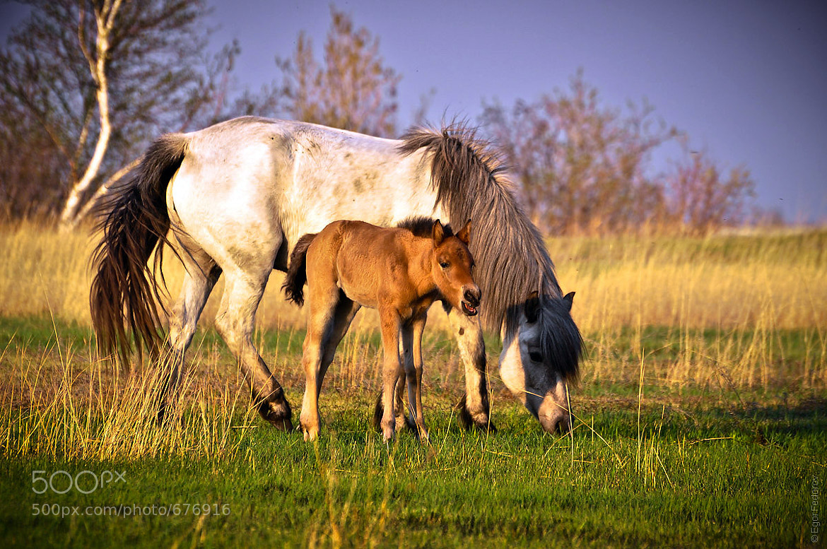 Photograph Horses by Egor Fedorov on 500px