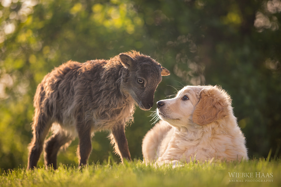 Photograph First Contact by Wiebke Haas on 500px