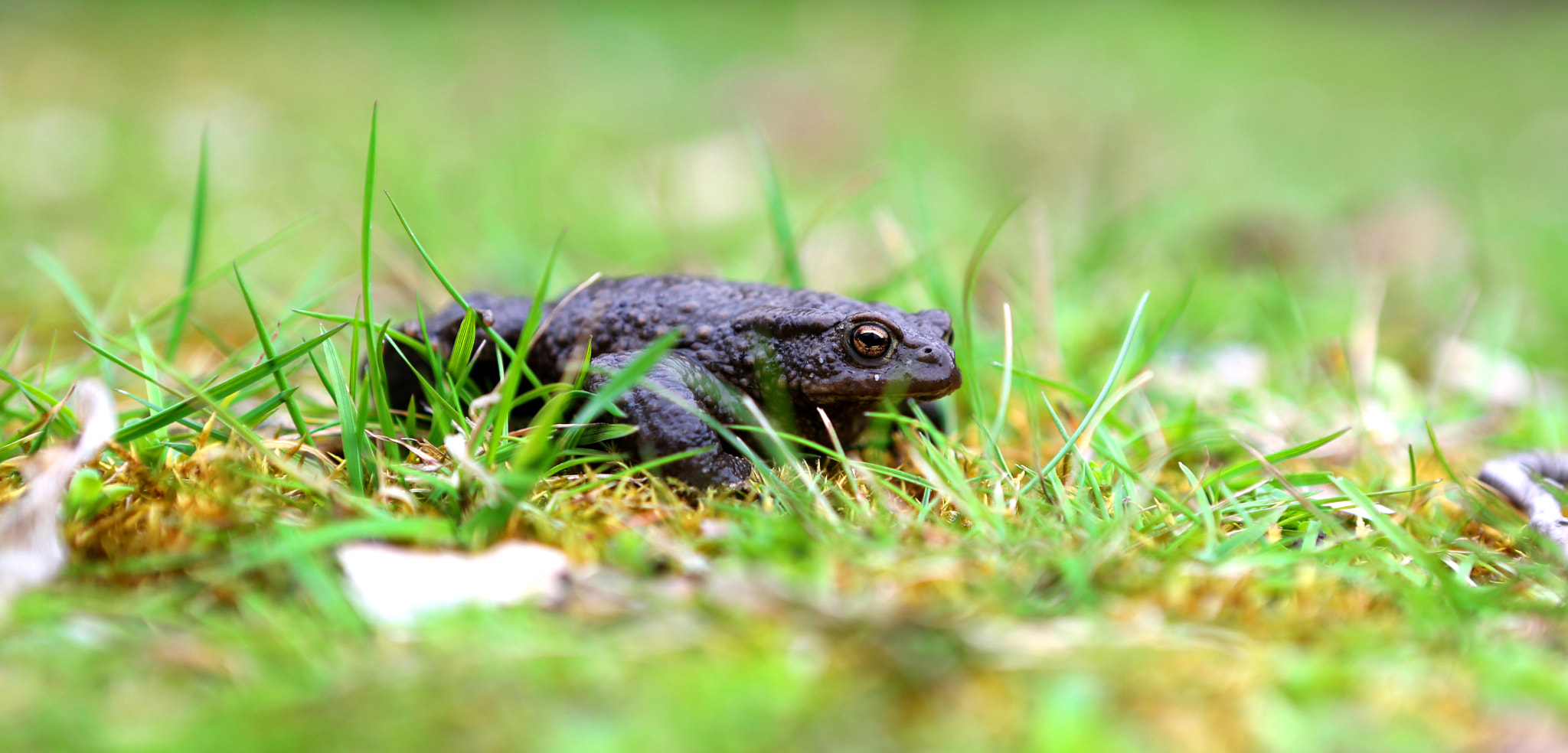 Photograph frog by Martin L. on 500px