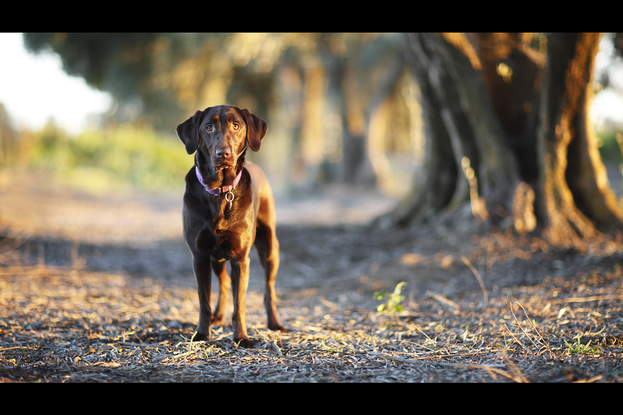 Photograph Cinematic Sam by Anthony Helton on 500px