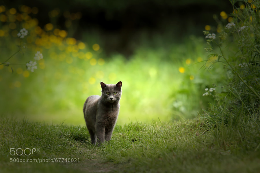 Photograph the cat by wise photographie on 500px