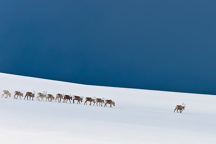 Photograph Follow the Leader by Stefan Brenner on 500px