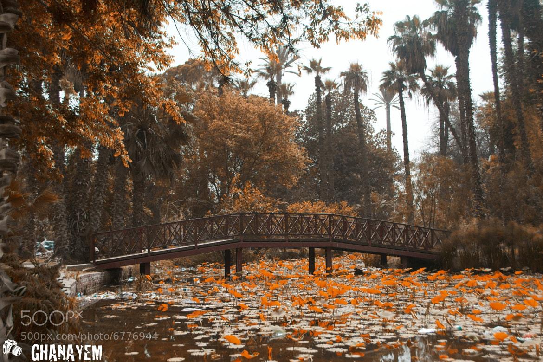 Photograph Its Orange Season by jamil ghanayem on 500px