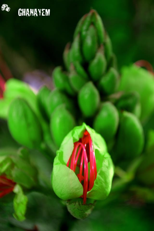 Photograph Red From Green by jamil ghanayem on 500px