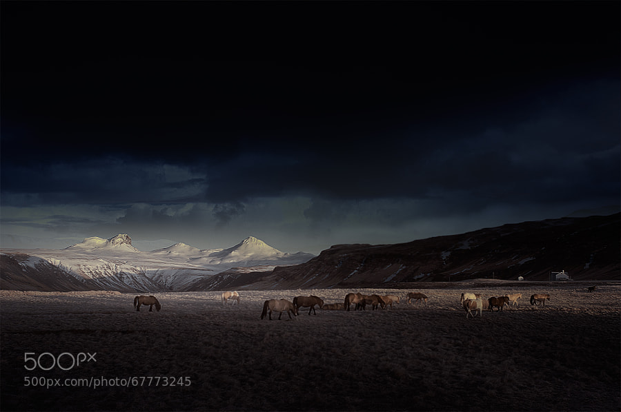 Photograph ? bunch of horses by Andy Lee on 500px