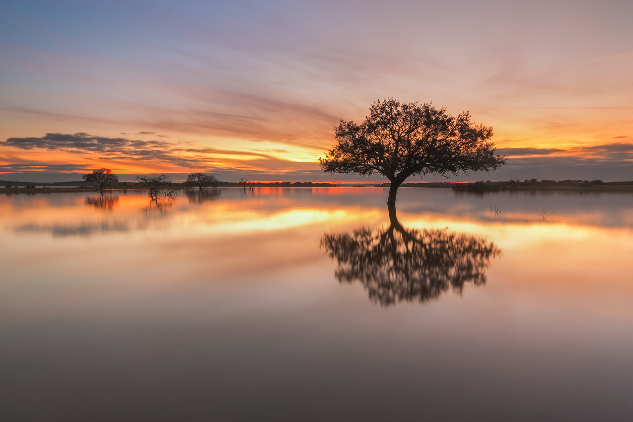 Photograph The Sound Of Silence by Hugo Borges on 500px