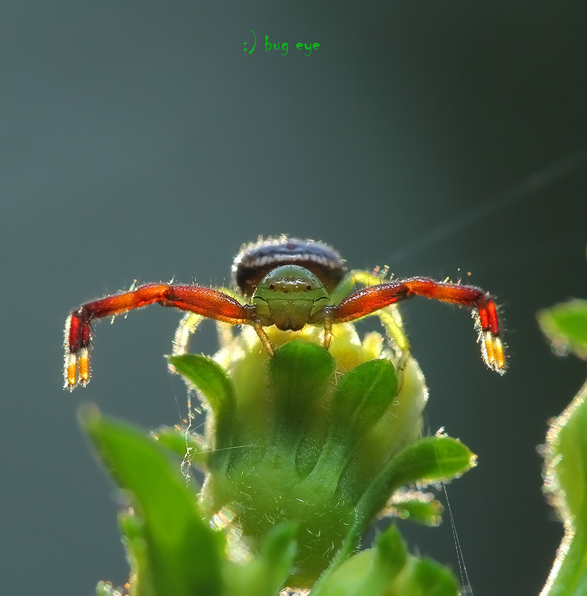 Photograph wait .................... by bug eye :) on 500px