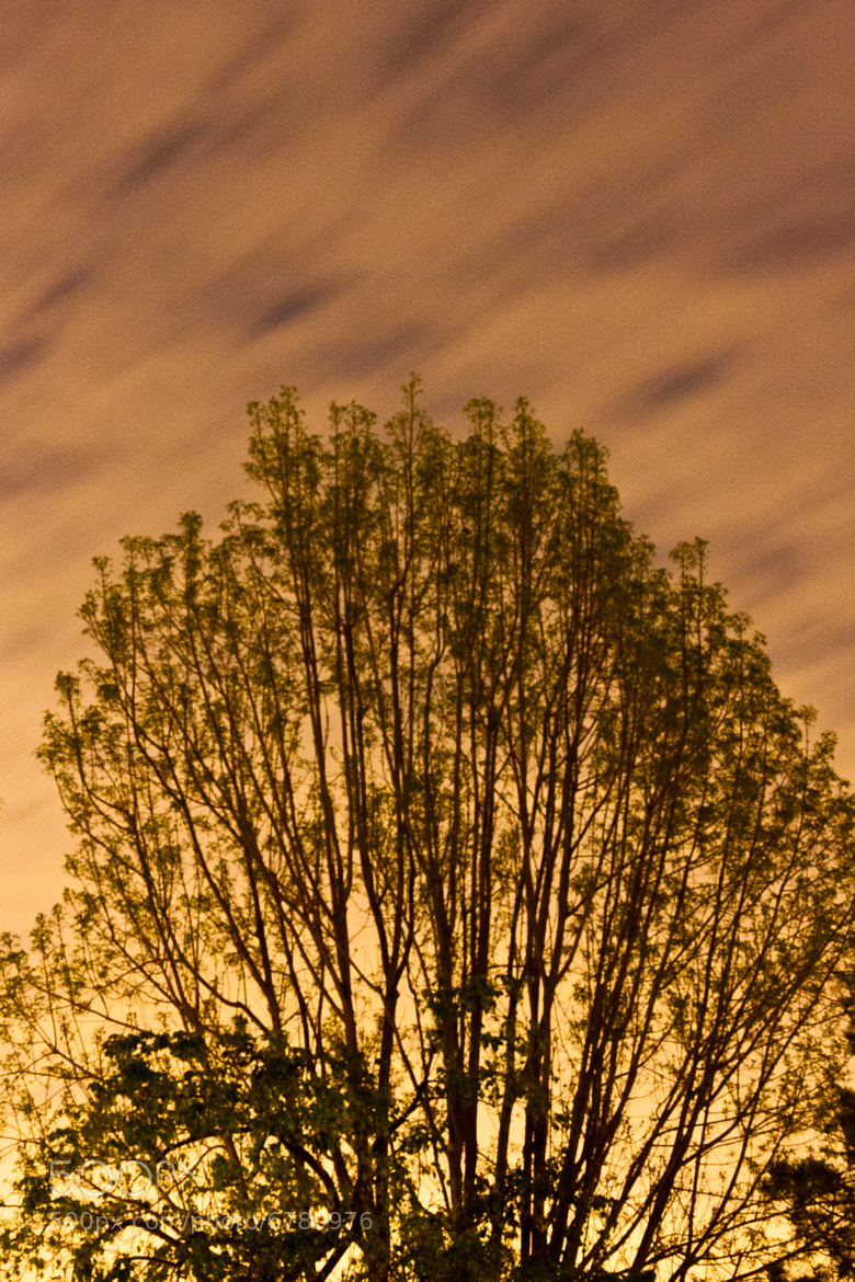 Photograph Tree by Tommy Niemerow on 500px