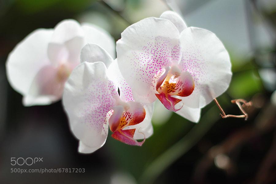 Photograph flowers by Ксения Давыдова on 500px