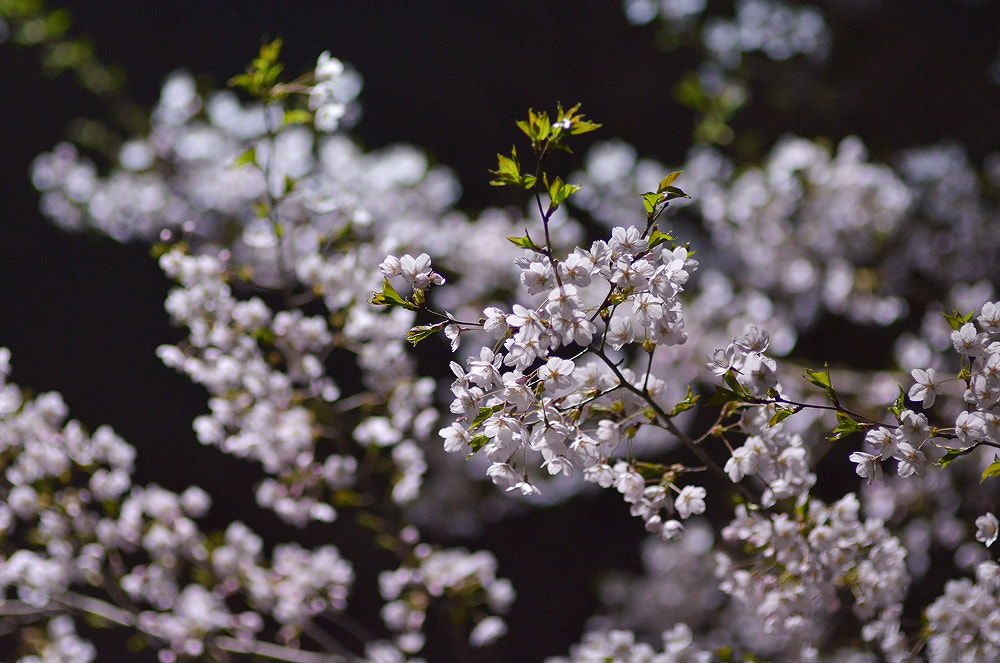 Photograph Untitled by Kyeong-sang Yun on 500px