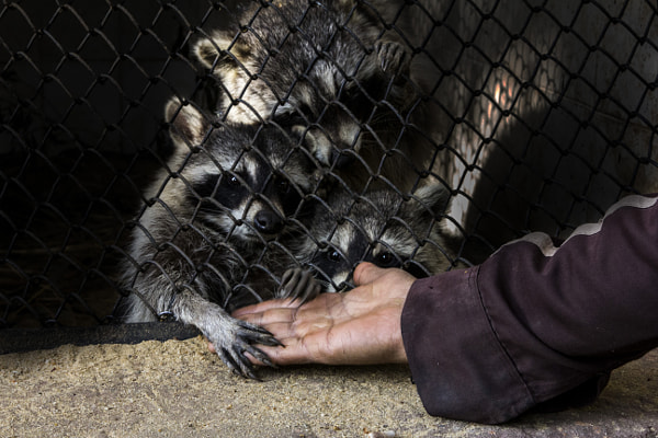 Photograph Pls rescue Animals in Jail by Dalia Rady on 500px