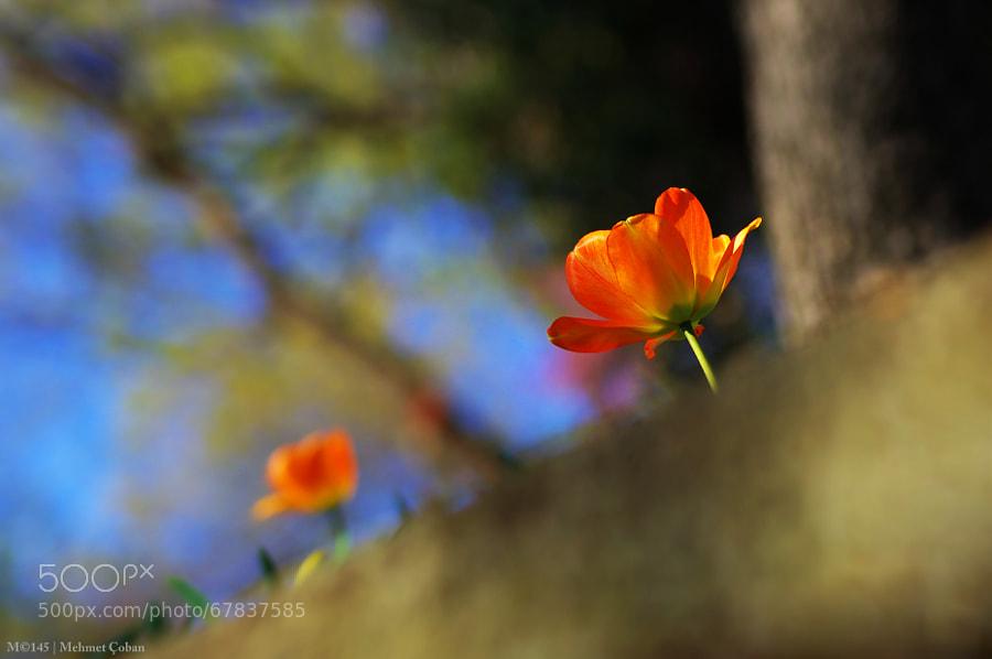 Photograph * by Mehmet Çoban on 500px