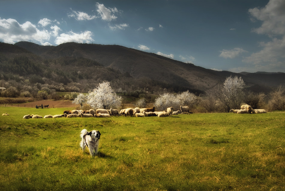 Photograph Pastoral by Silvia S. on 500px