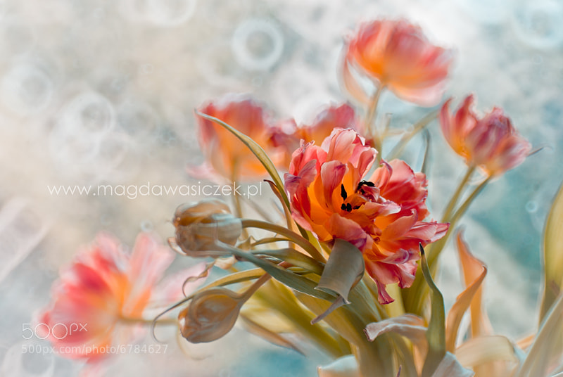 Photograph The Spring Bouquet by Magda Wasiczek on 500px