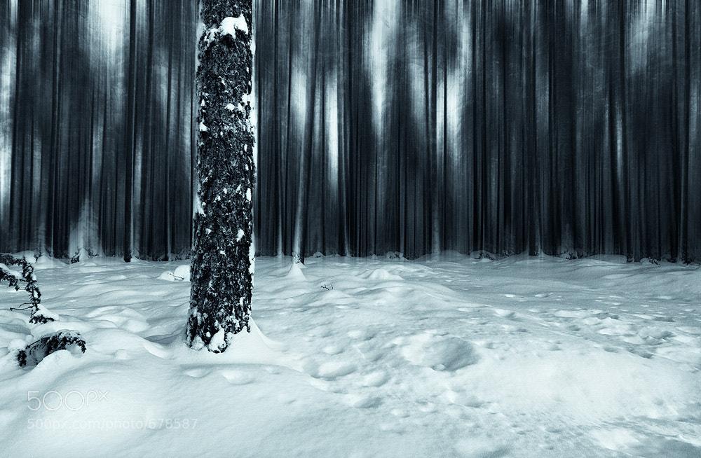 Photograph Blurred Forest by Joni Niemelä on 500px