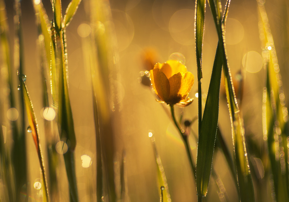 Photograph Yellow Morning by Joni Niemelä on 500px