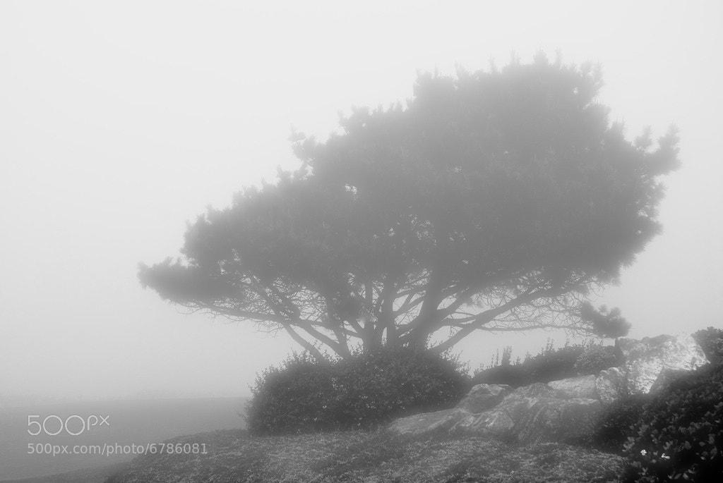 Photograph niebla y soledad by Luis Martínez on 500px