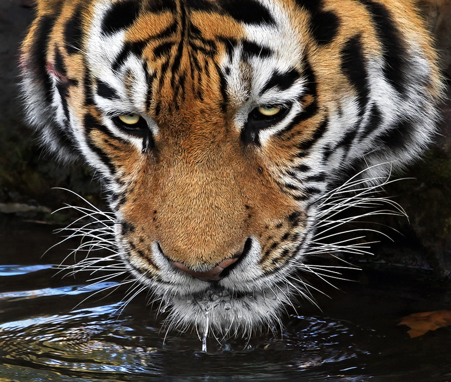 Photograph Thirsty by Klaus Wiese on 500px