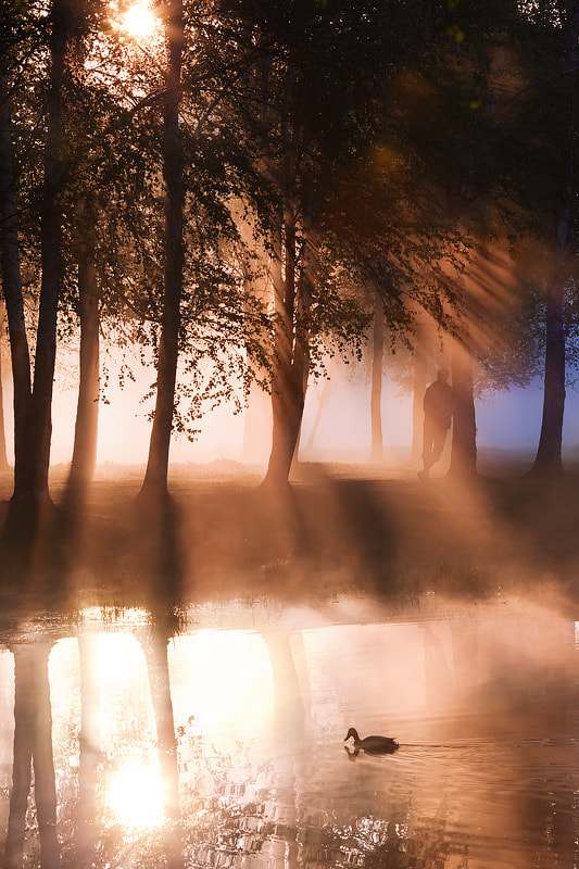 Photograph Morning in the park by Alexei Mikhailov on 500px