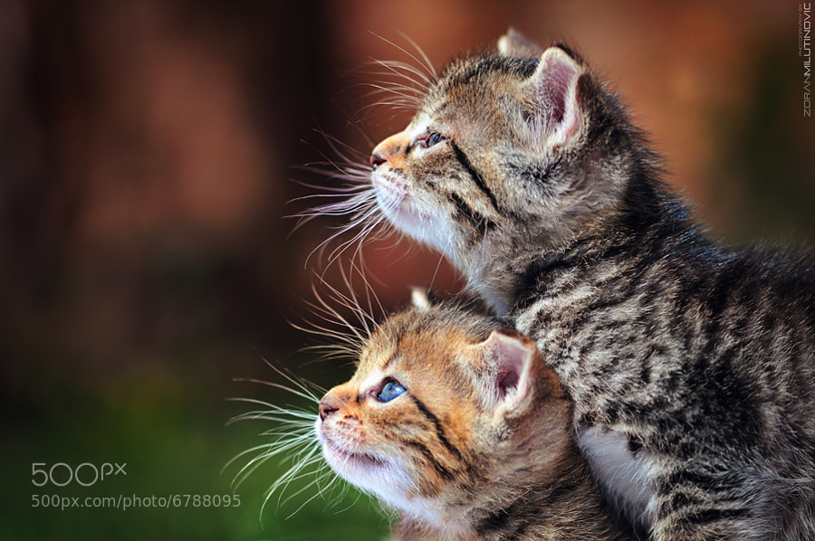 Two For Fun - And now the exciting begins :) by Zoran Milutinovic (ZoranPhoto) on 500px.com