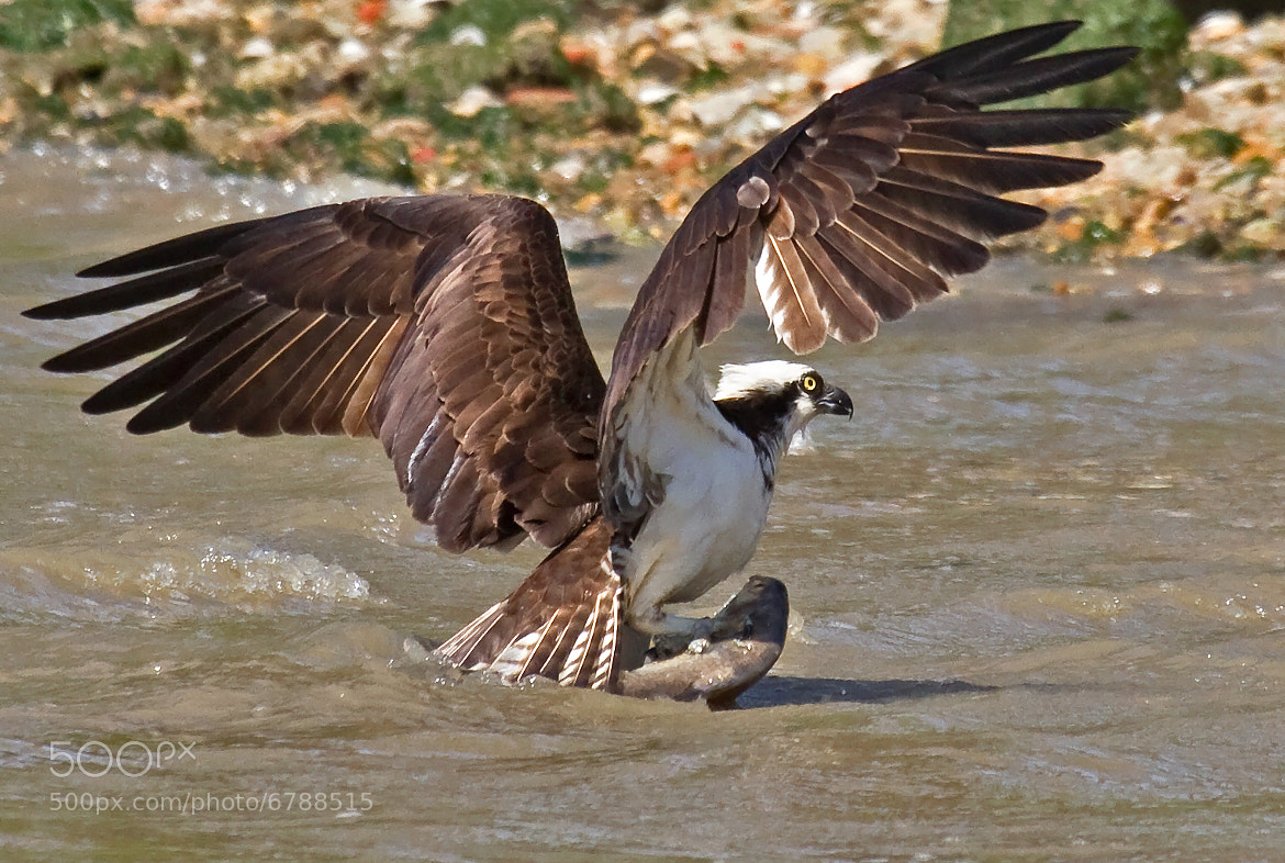 Photograph After The Catch by Lorraine Hudgins on 500px