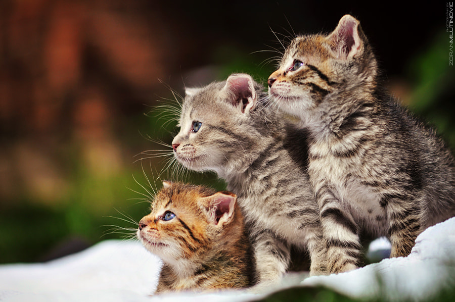 500px Blog 21 Tips For Taking Incredible Cat Photos