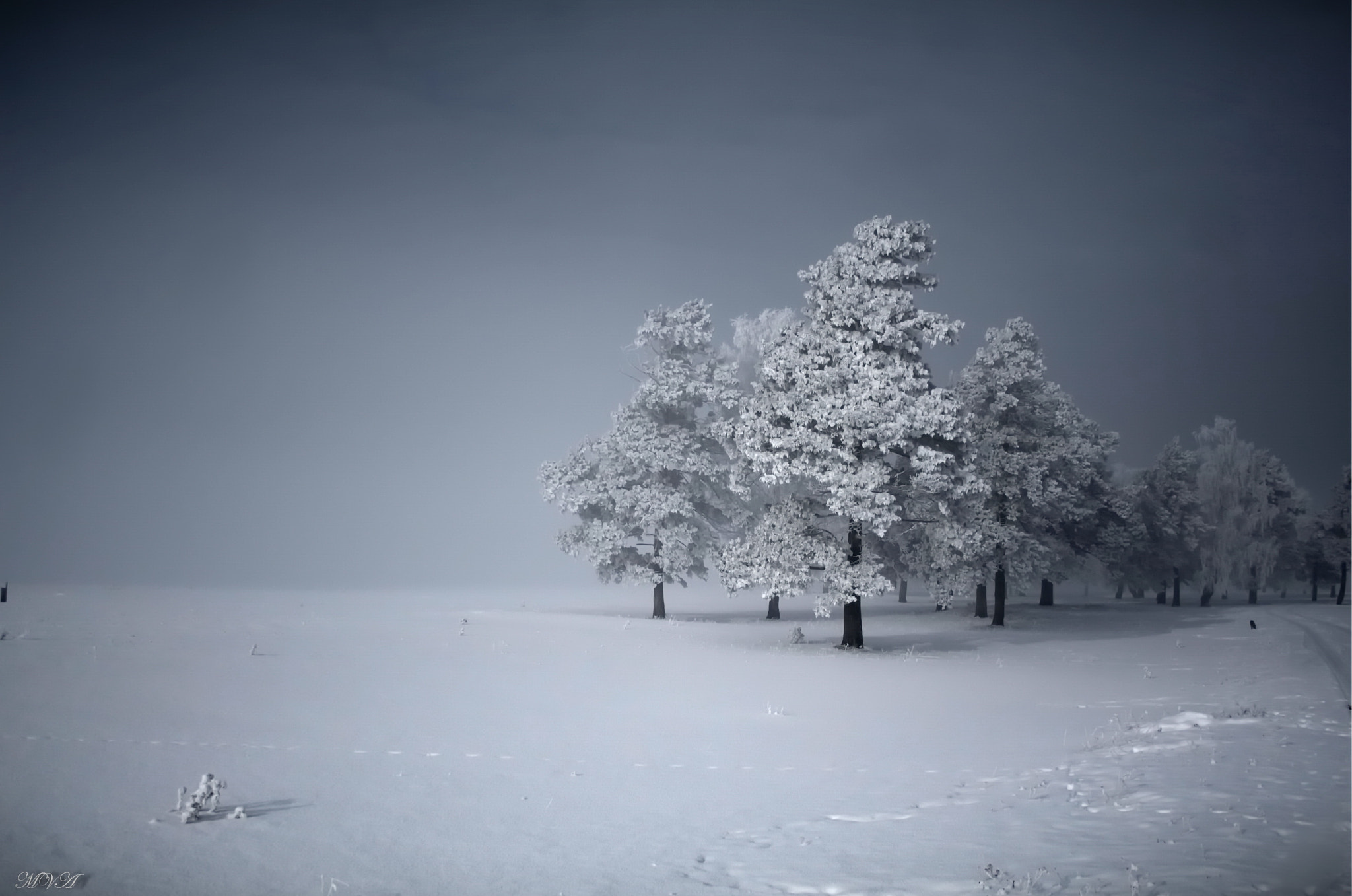 Photograph Winter's Tale-2 by Maxim Agafonoff on 500px