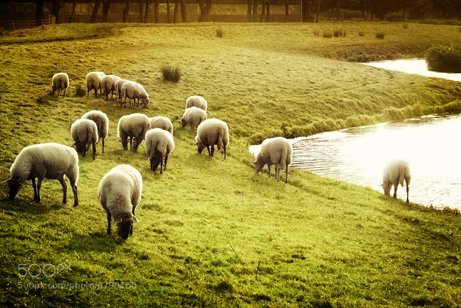 Photograph The herd by op drie on 500px