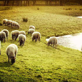 The herd by op drie (opdrie)) on 500px.com