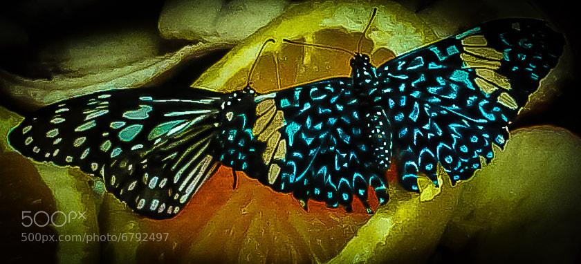 Butterfly exhibit, Omaha Zoo, Omaha Nebraska