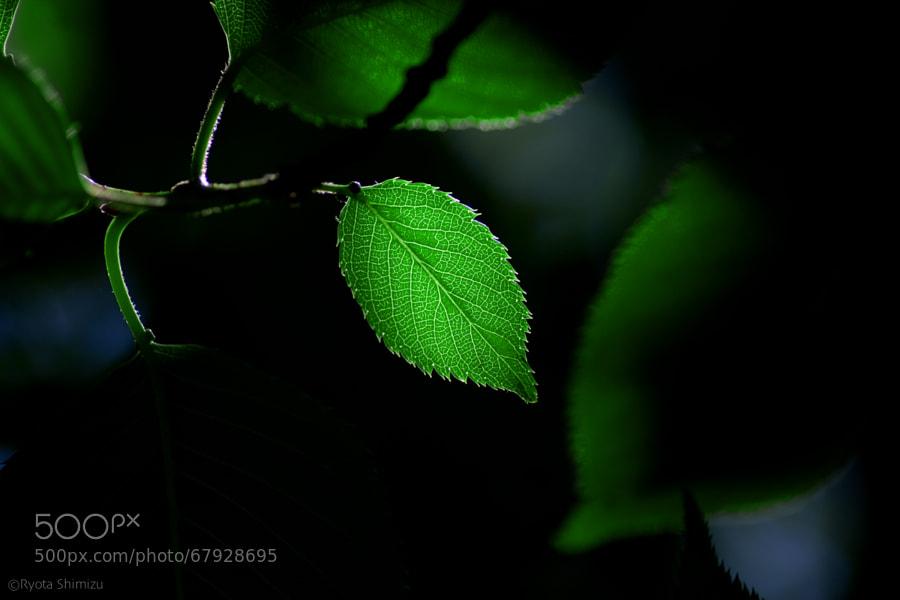 Photograph green/spotlight by Ryota Shimizu on 500px