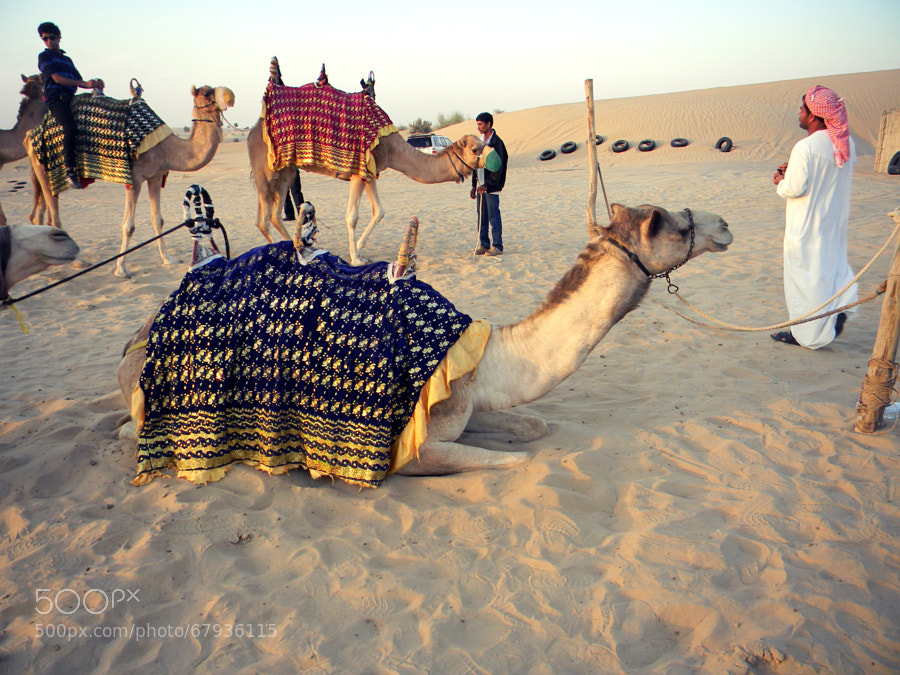 Photograph Camel on camel by Khush Savjani on 500px