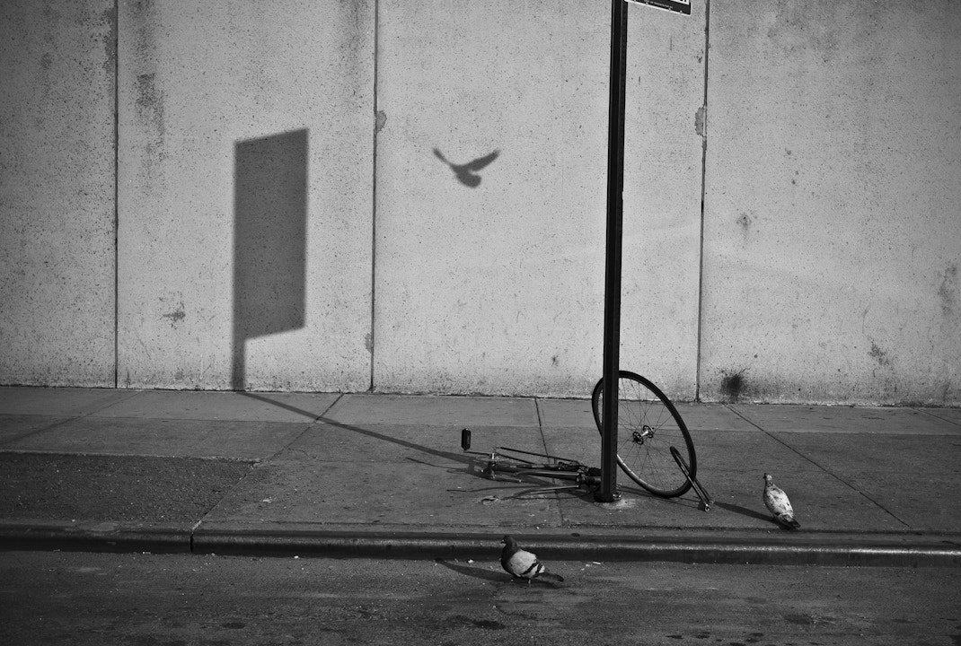 Photograph Birds and a bicycle by Walter  Shin on 500px