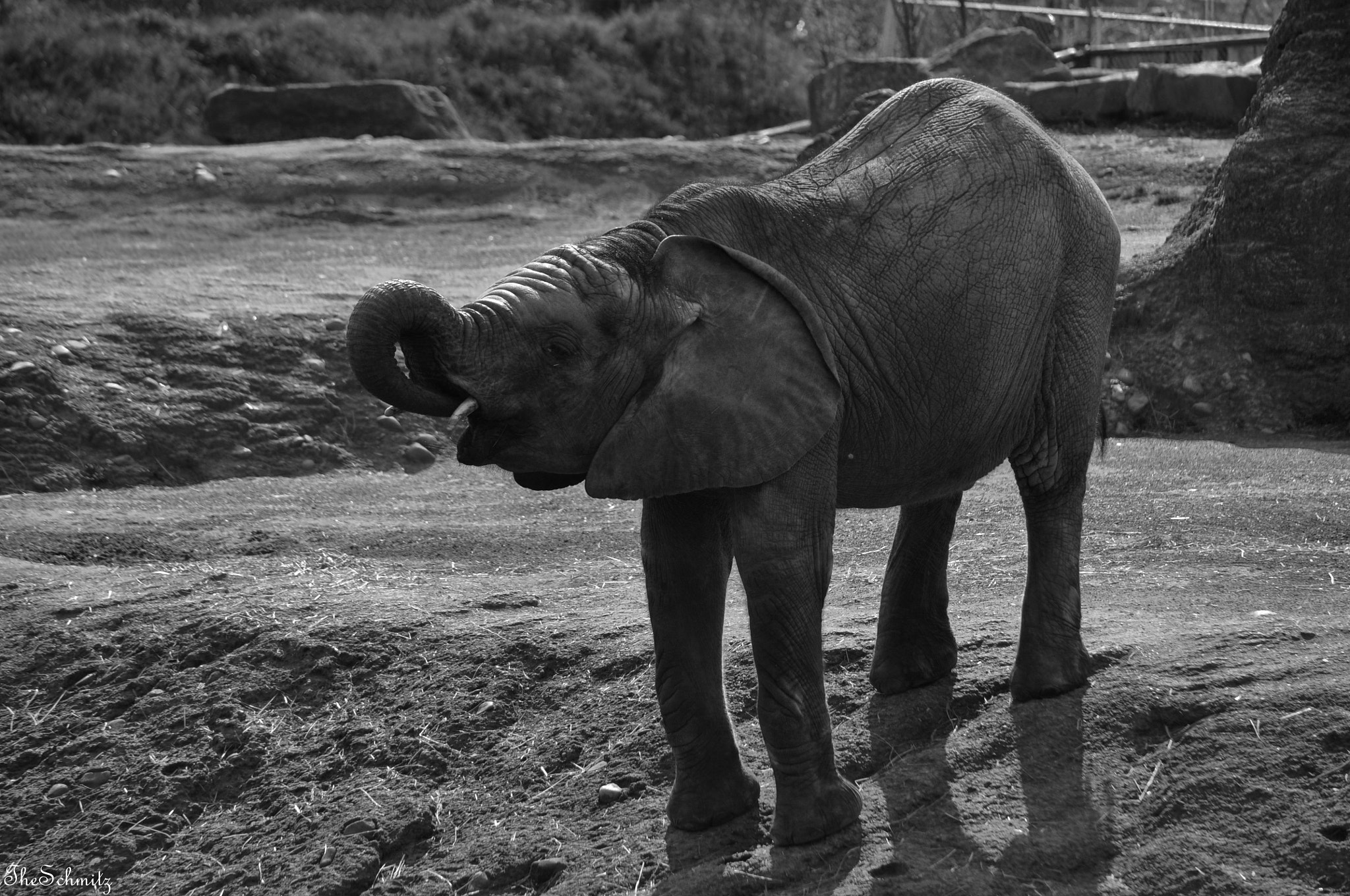Photograph Baby Elephant by The Schmitz on 500px