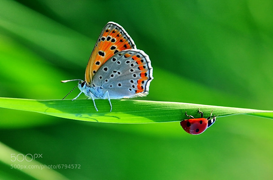 Photograph My love by yilmaz uslu on 500px