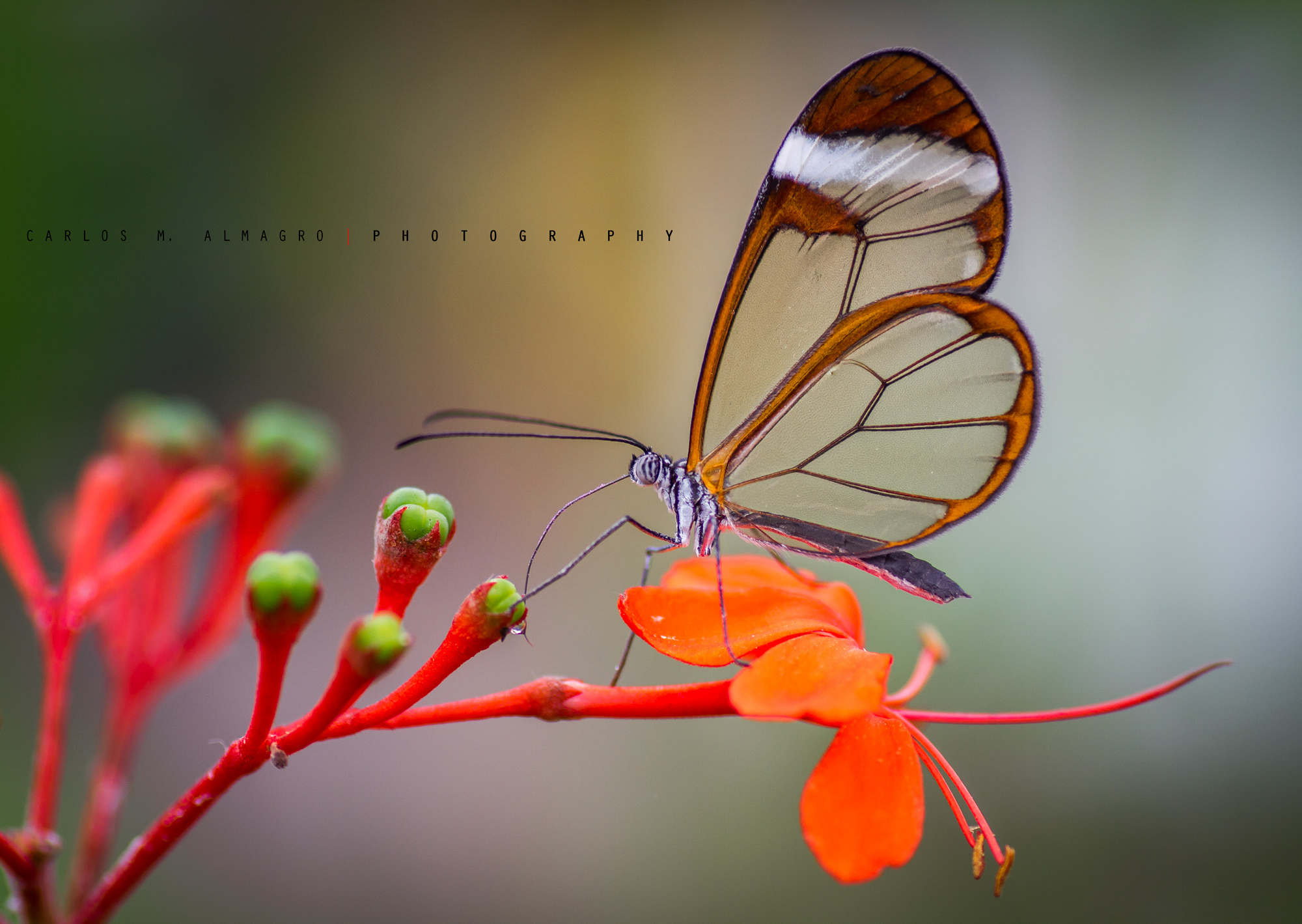 Photograph Transparency by Carlos M. Almagro  on 500px