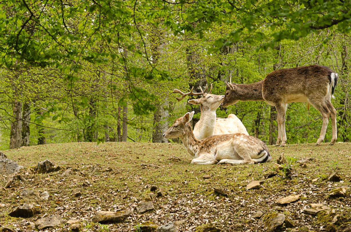 Photograph A stag and his court by C. D. on 500px