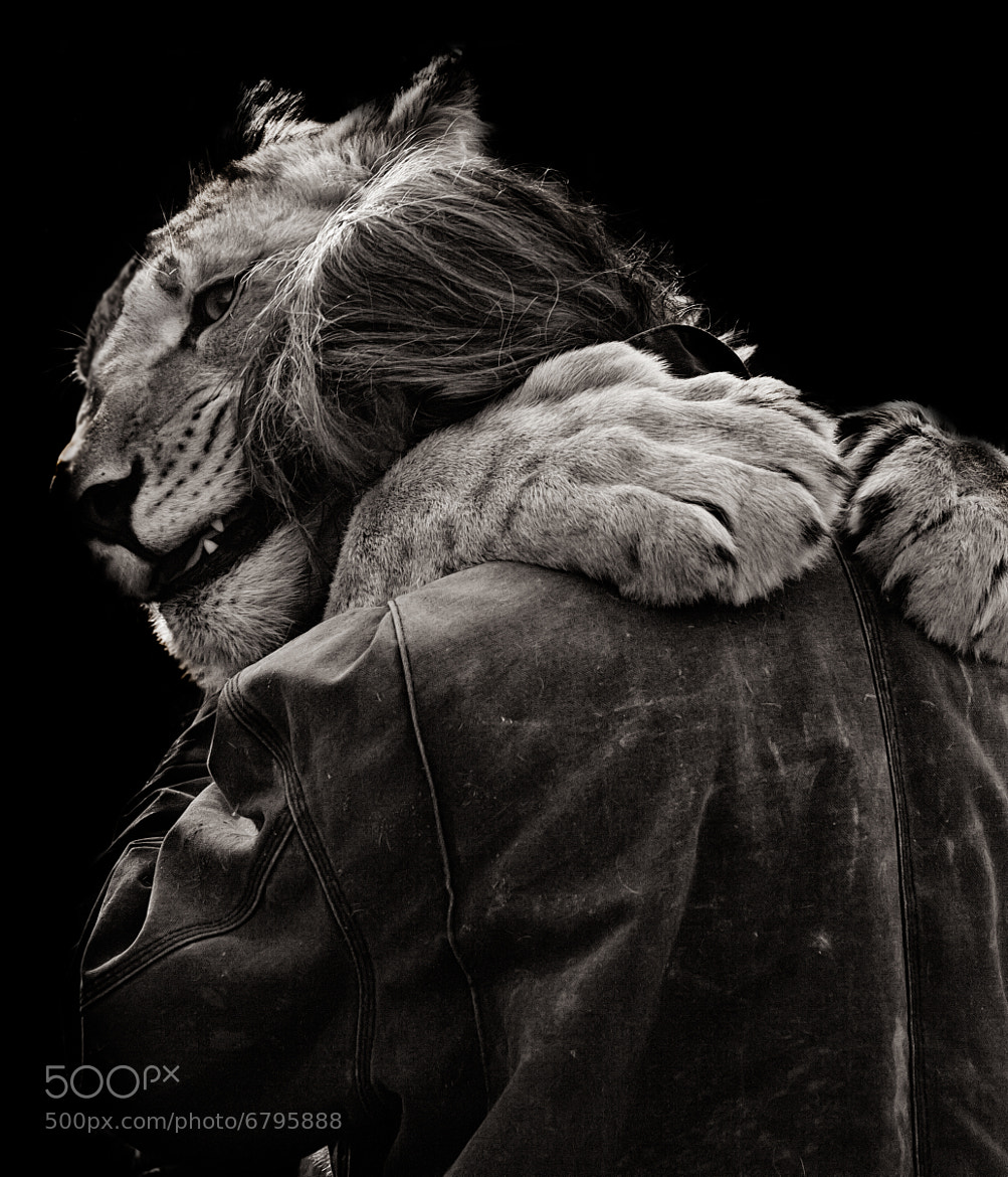 Photograph Lions Hugs. by Nathan Schepker on 500px