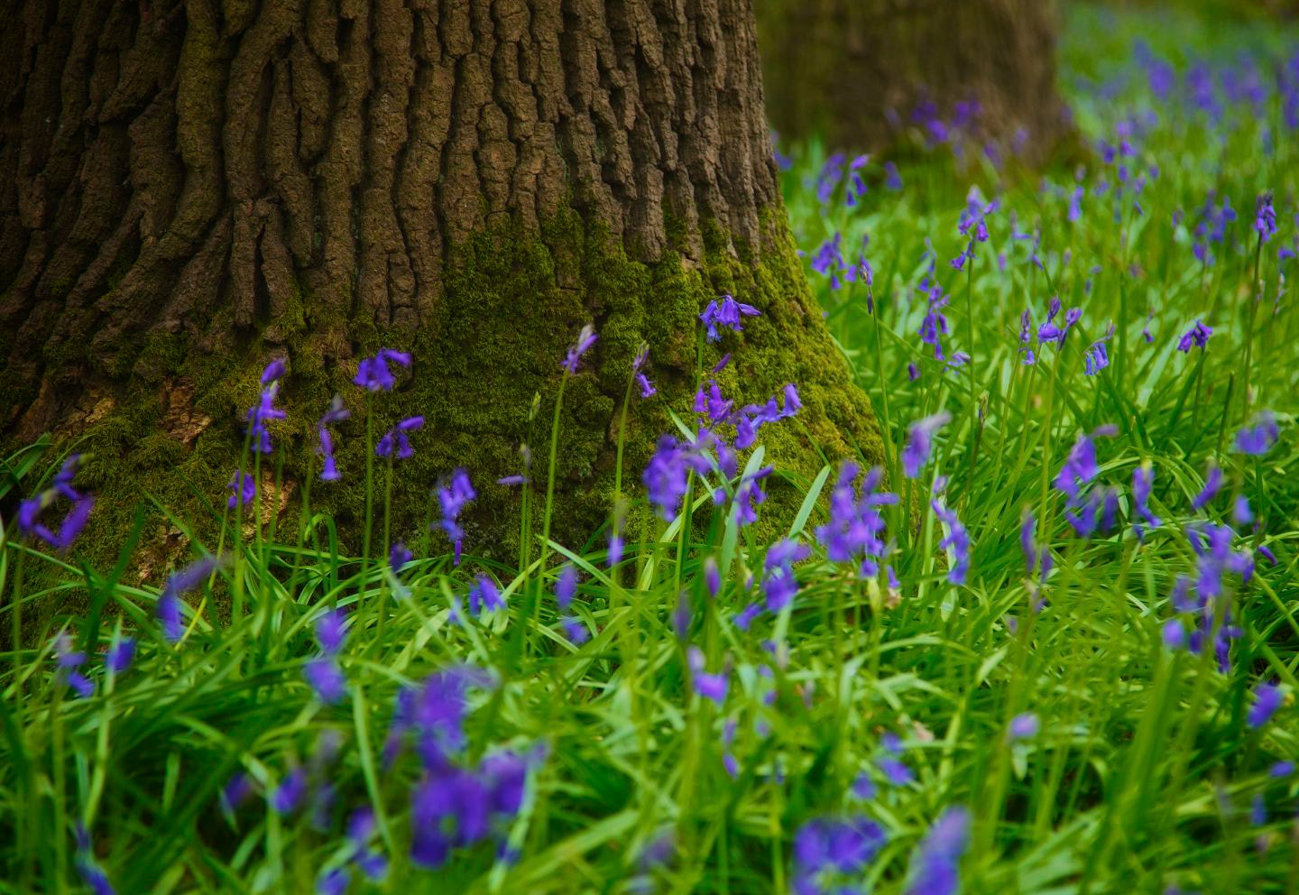 Photograph Tree trunk with blue by Sarah Knights on 500px