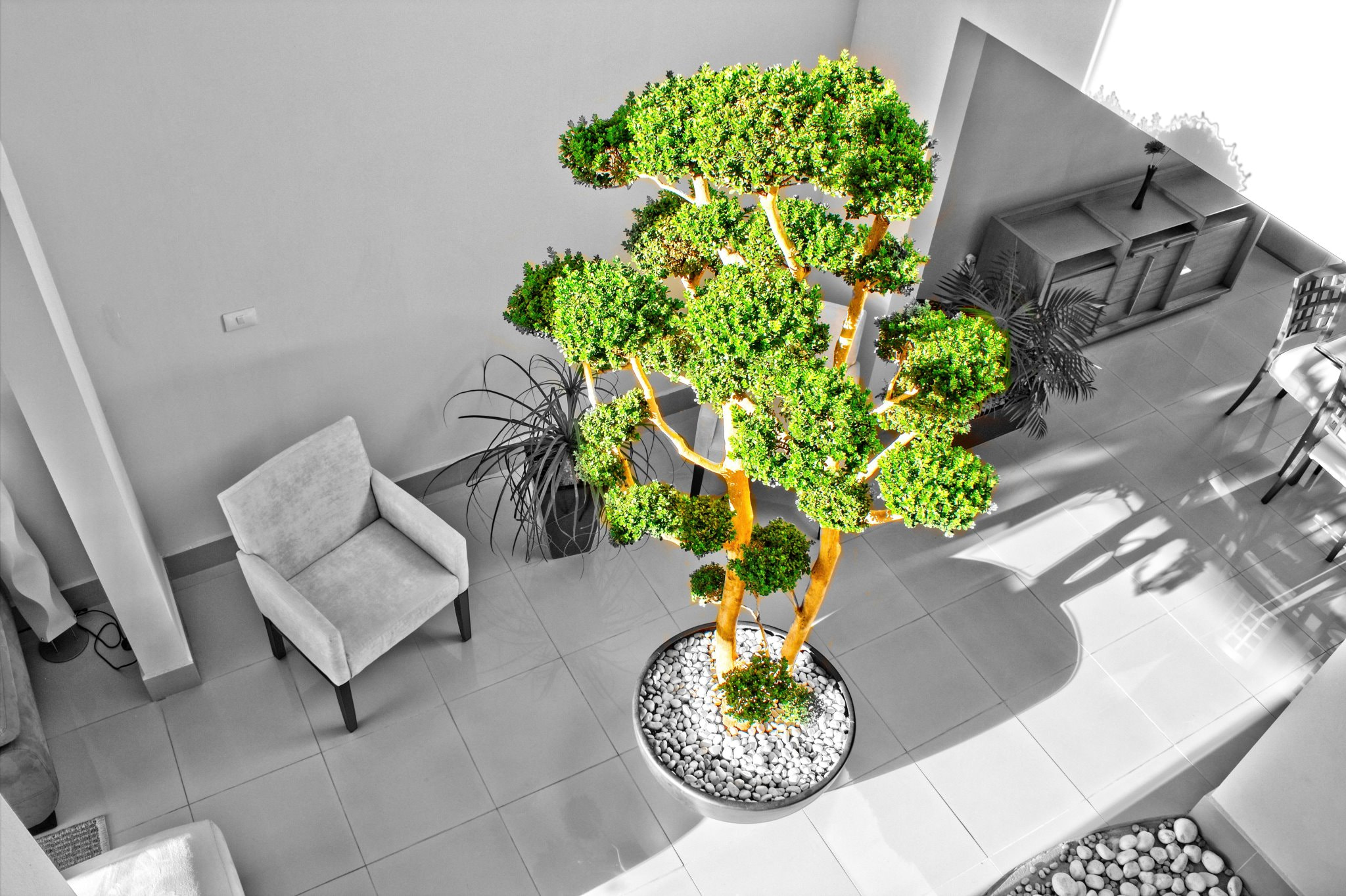 Photograph Tree indoor by Carlo Jimenez on 500px