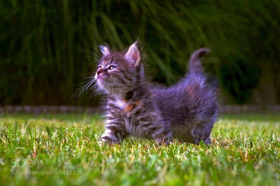 Photograph Cat2 by Albin Bezjak on 500px