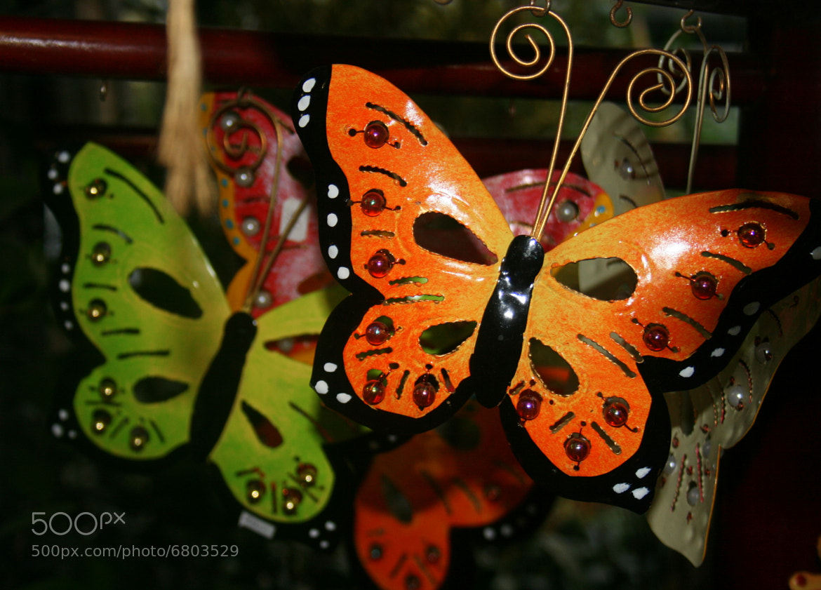 Photograph Evening Butterflies by Astrid angel on 500px