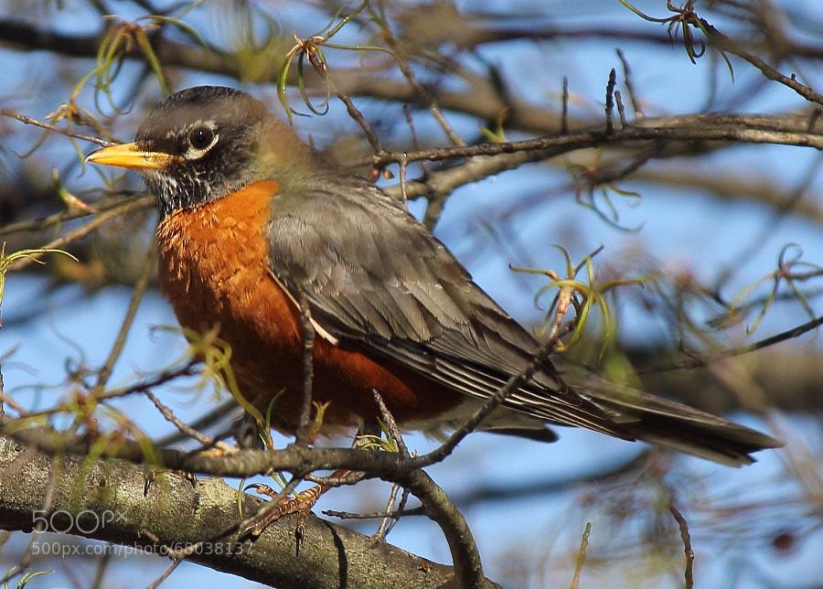 Home Robin