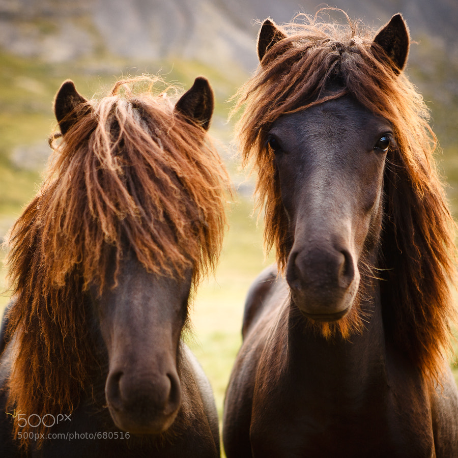 Two Wild Horses by Jens Klettenheimer