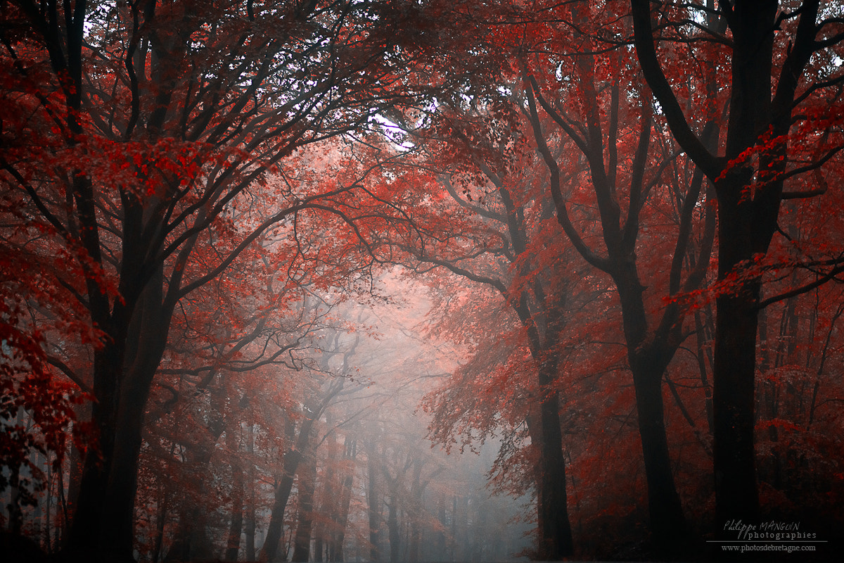 Photograph My red dream by Philippe MANGUIN on 500px