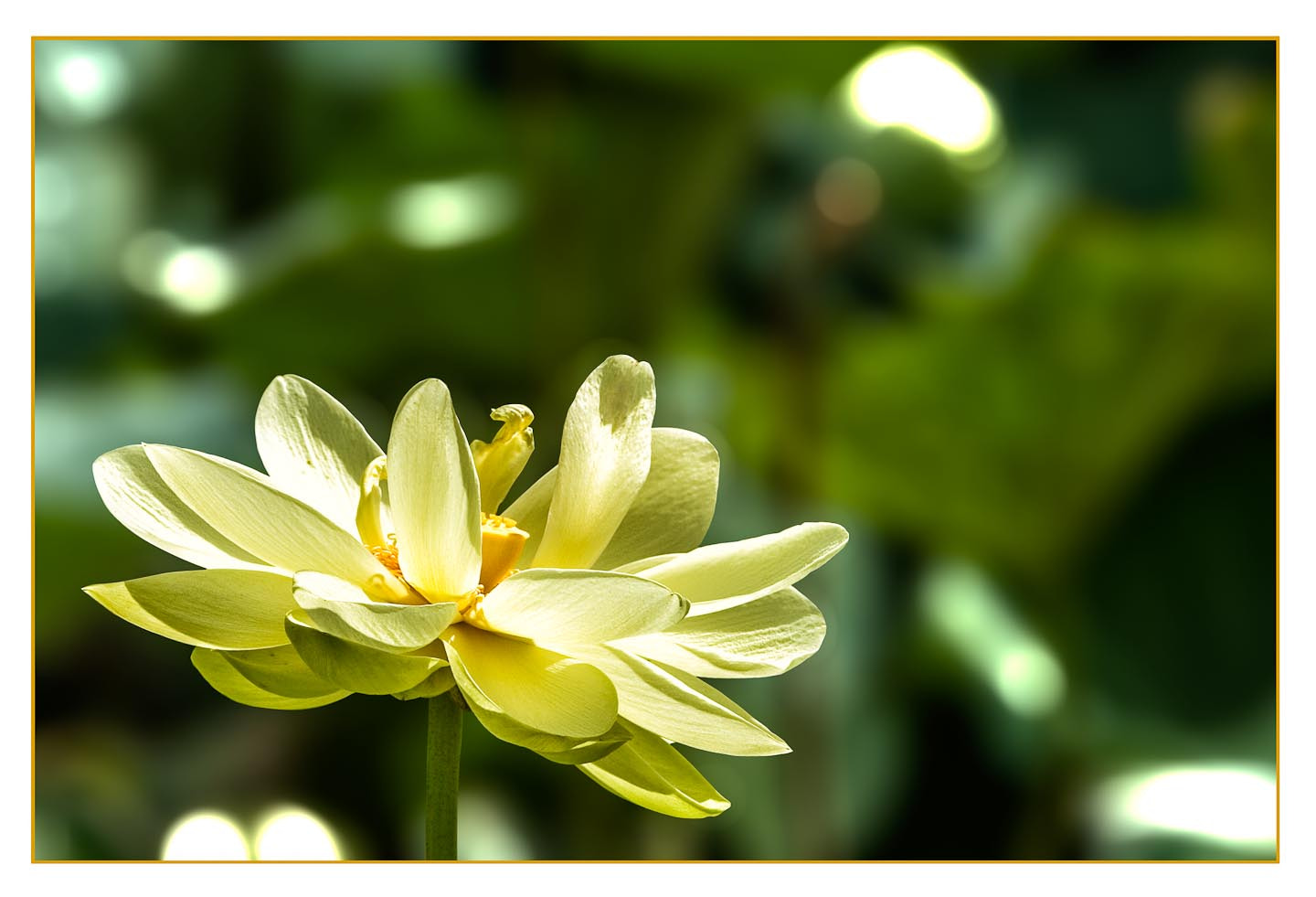 Photograph Lotus by Chris Huxley on 500px