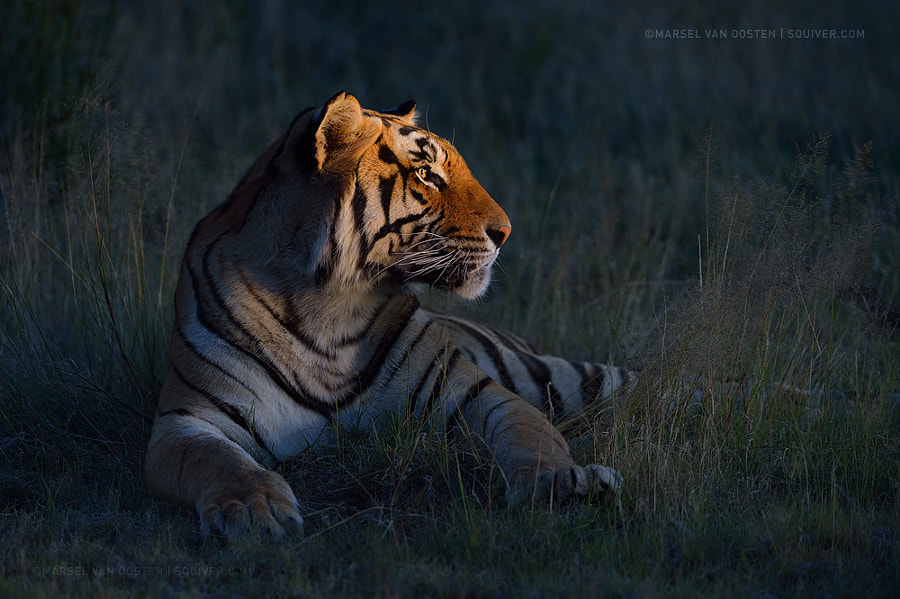Photograph King Of The Night by Marsel van Oosten on 500px